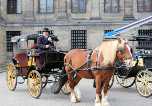 Mook News - Horse-Drawn Carriages